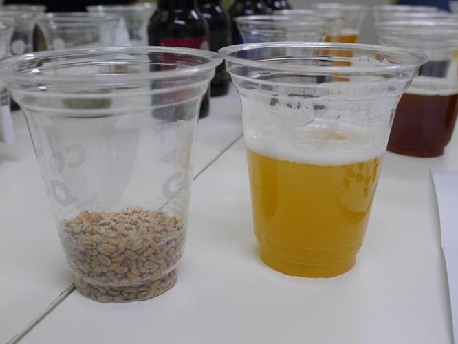 コエドビールで使われる材料(麦)のお話だったり