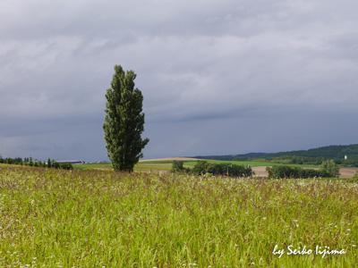 2014夏北海道ケンとメリーの木